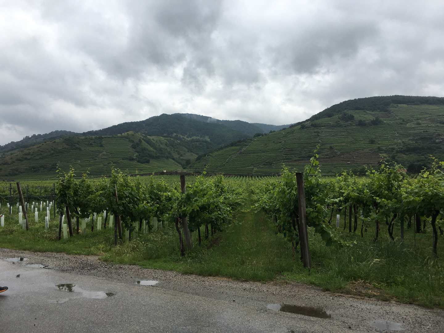 XWP team rainy bike ride through the Wachau Valley, Vienna